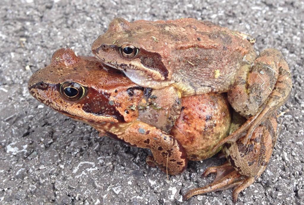 """""""Mama-Frosch und Kind-Frosch"""""""