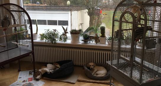 Tiere chillen am Vormittag